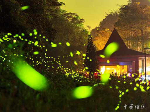 螢火蟲微光攝影技巧