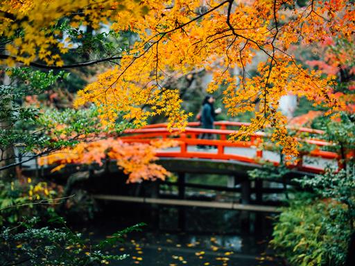 Canon EOS R X 橫濱.鎌倉.江之島散步