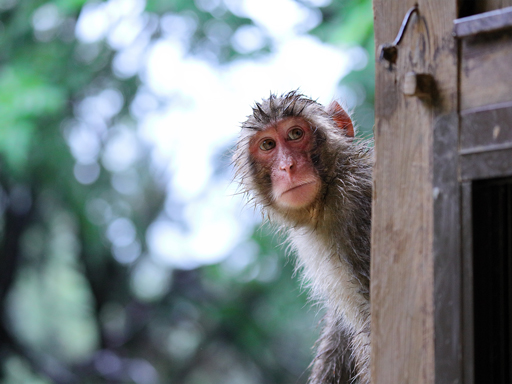 岩田山上的猴子星球 帶著 EOS R 探訪野生小猴生態世界